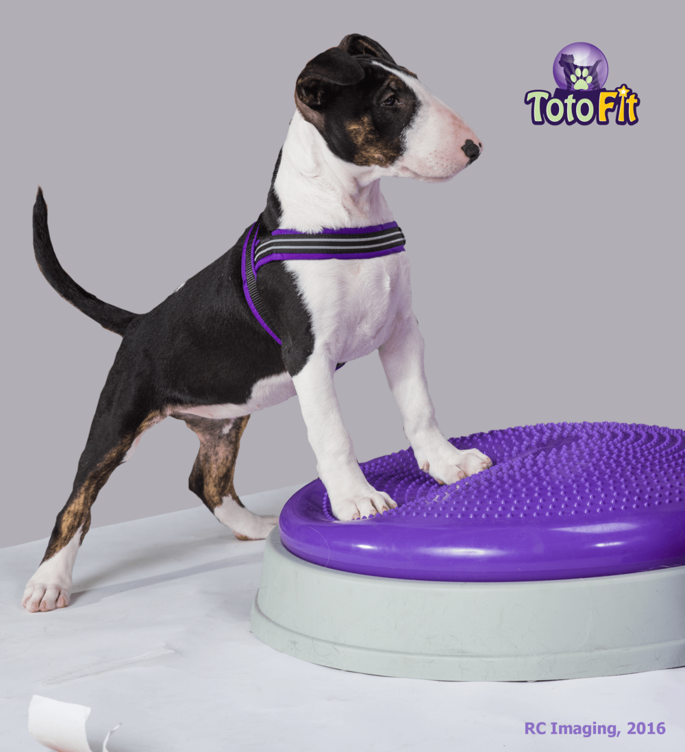 Toto-Fit - - Sells an array of products to help develop balance and increase core strength- Purple inflatable items are Latex, Lead, BPA and Phthalate free- Products can be ordered directly-  It is highly recommended that you consult with us to determine which equipment will be best suited to your pet's needs