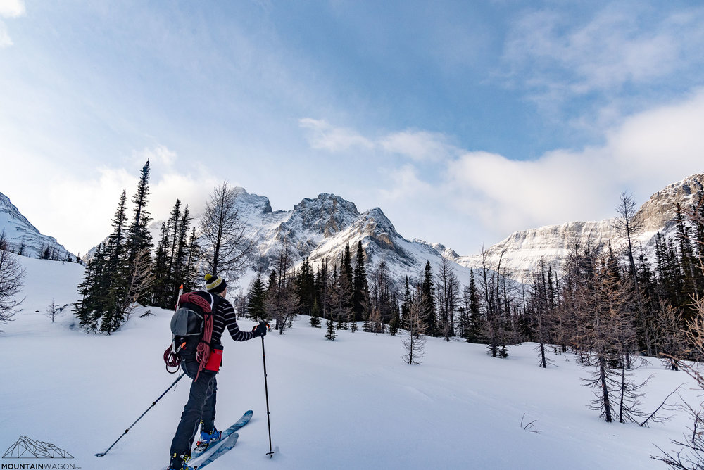 Reaching tree-line in the French Creek drainage