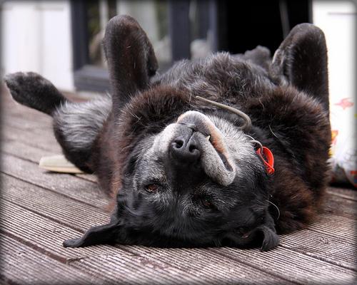 Senior-Dog-1.jpg