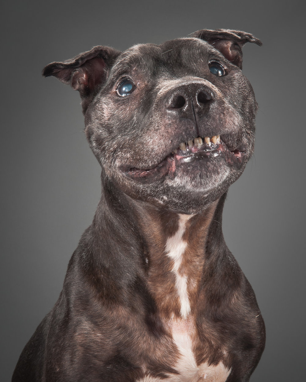 old-dog.jpg