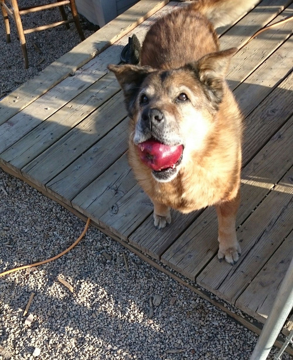 Senior dogs are the best!   - We hope to change the negative stigma around adopting senior dogs.