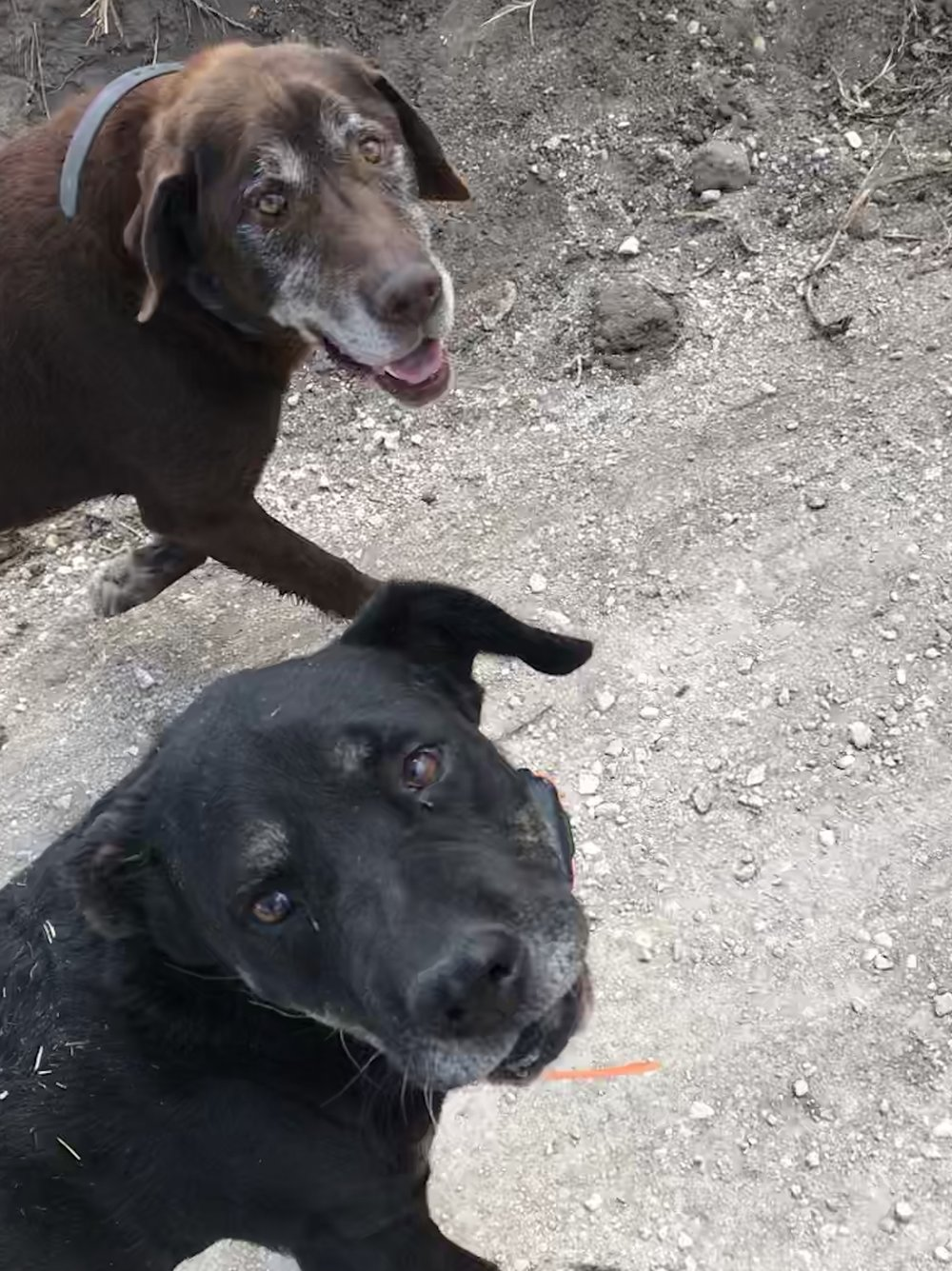 Our Resident Happy Tails - We hope to provide a safe and happy leeway station for senior dogs until a foster home is found in which they can live out their final days in peace.