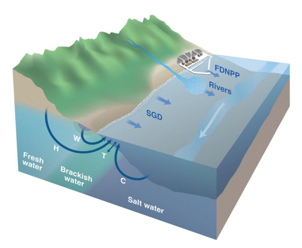 Radioactive cesium is exchanged between the fresh groundwater and the salty ocean water. Credit: PNAS.
