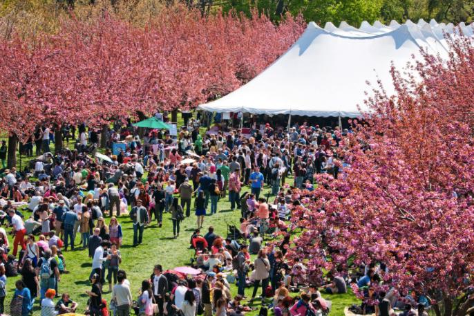 Brooklyn Cherry Blossom