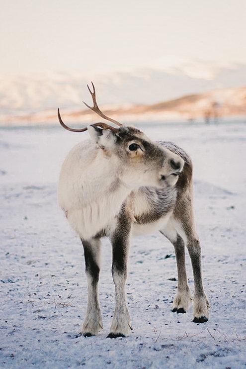 tromso norway, photographer, wildlife photographer, travel photographer, soft palate