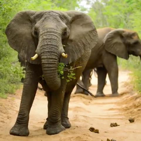 elephant square.jpg
