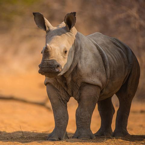 shannon_rhino.jpg