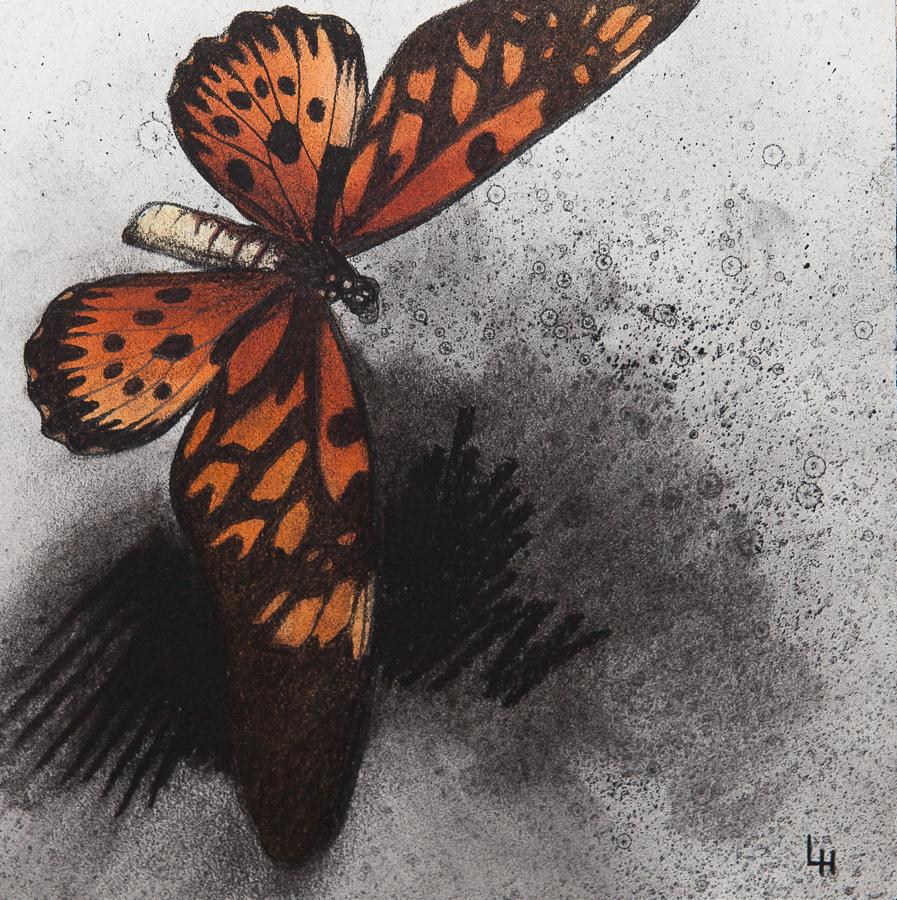 26. Papilio antimachus.jpg