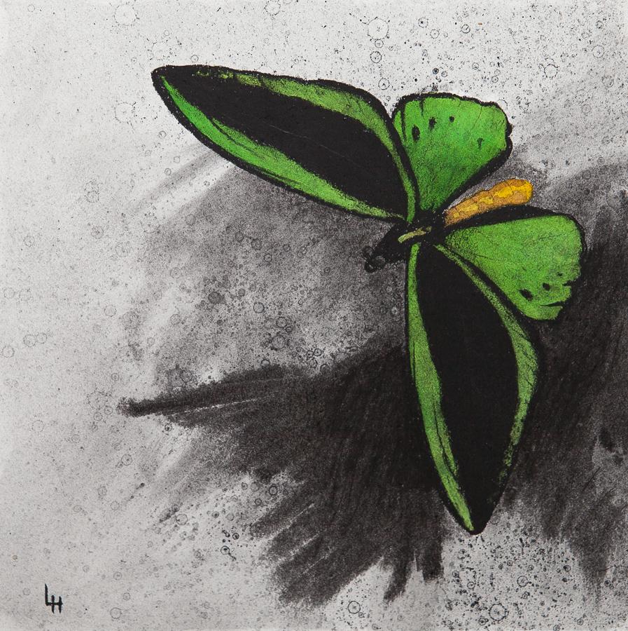 21. Ornithoptera priamus.jpg