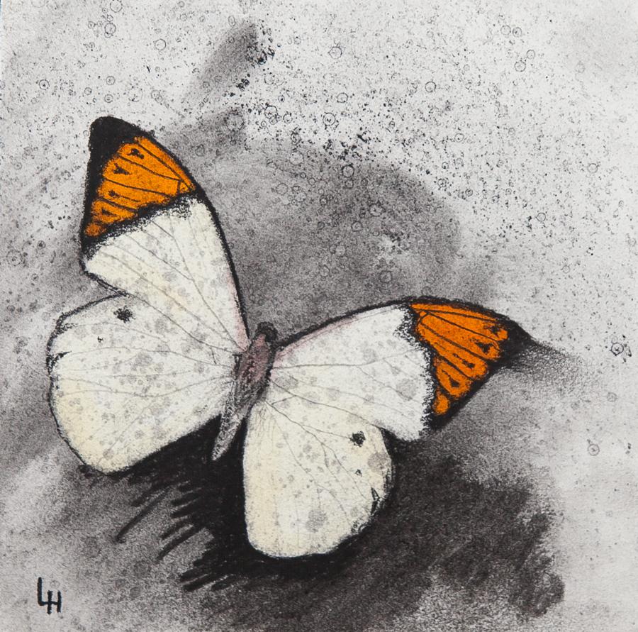 18. Hebomoia glaucippe.jpg