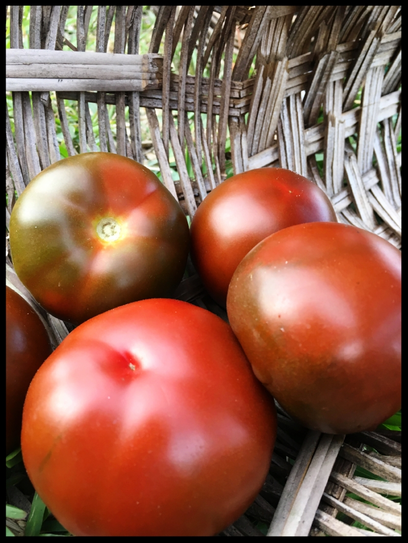 Espresso Heirloom Tomatoes
