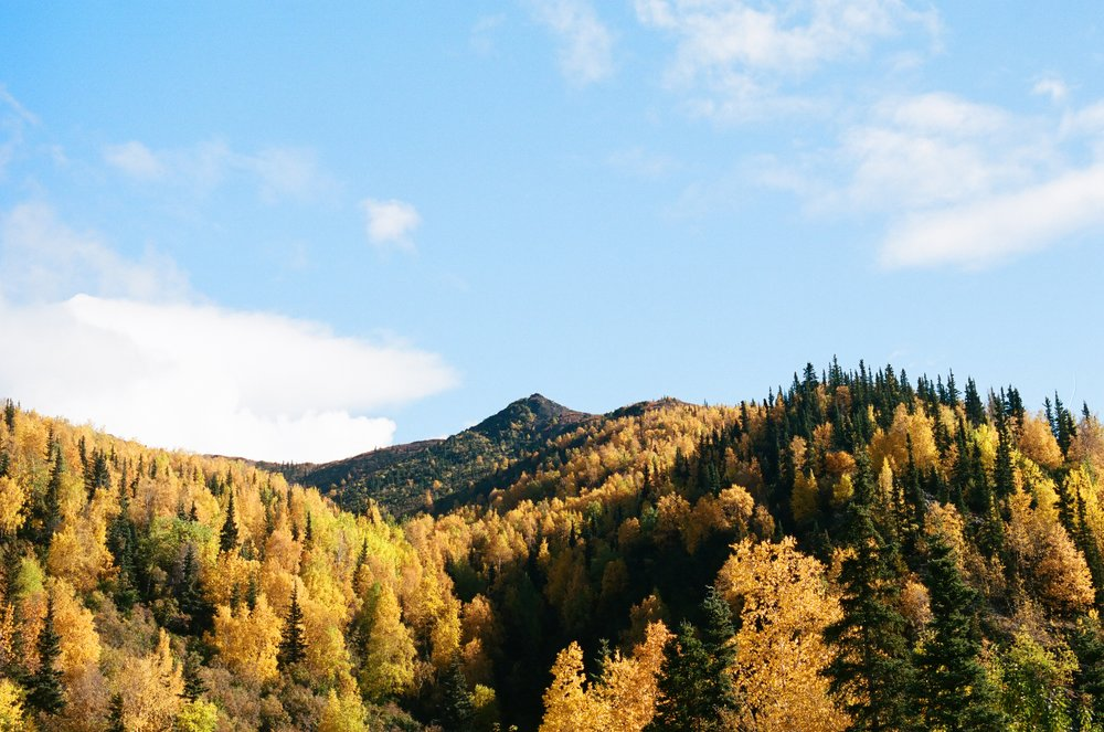 During my four months in Denali, the I watched the seasons change three times. Beautiful fall foliage signaled the end.