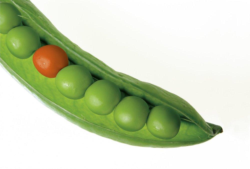 peas-pod-pea-pod-green-40788.jpeg