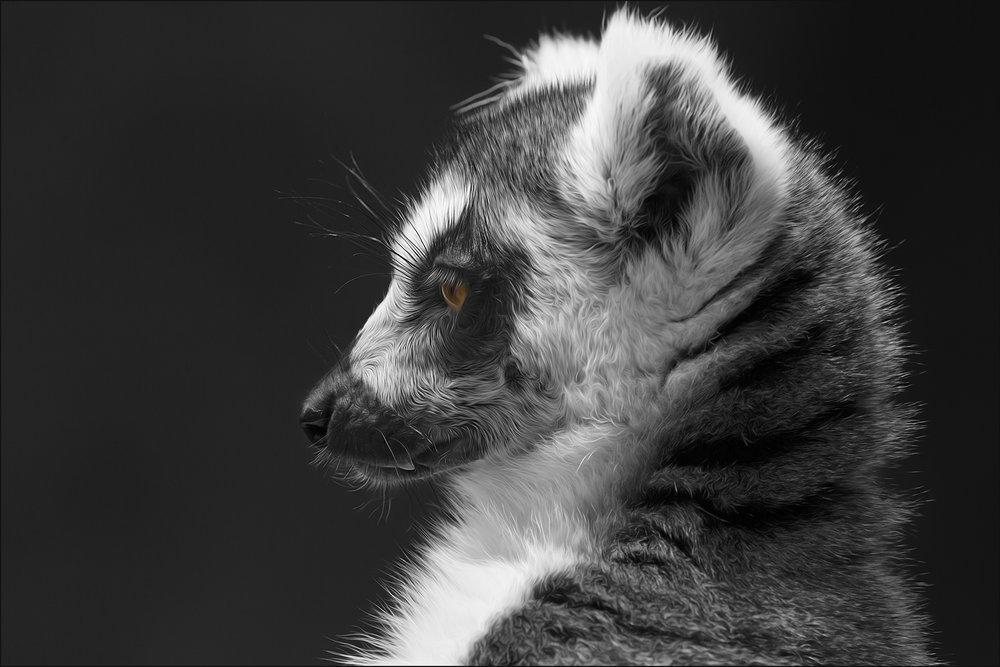 Furry Profile