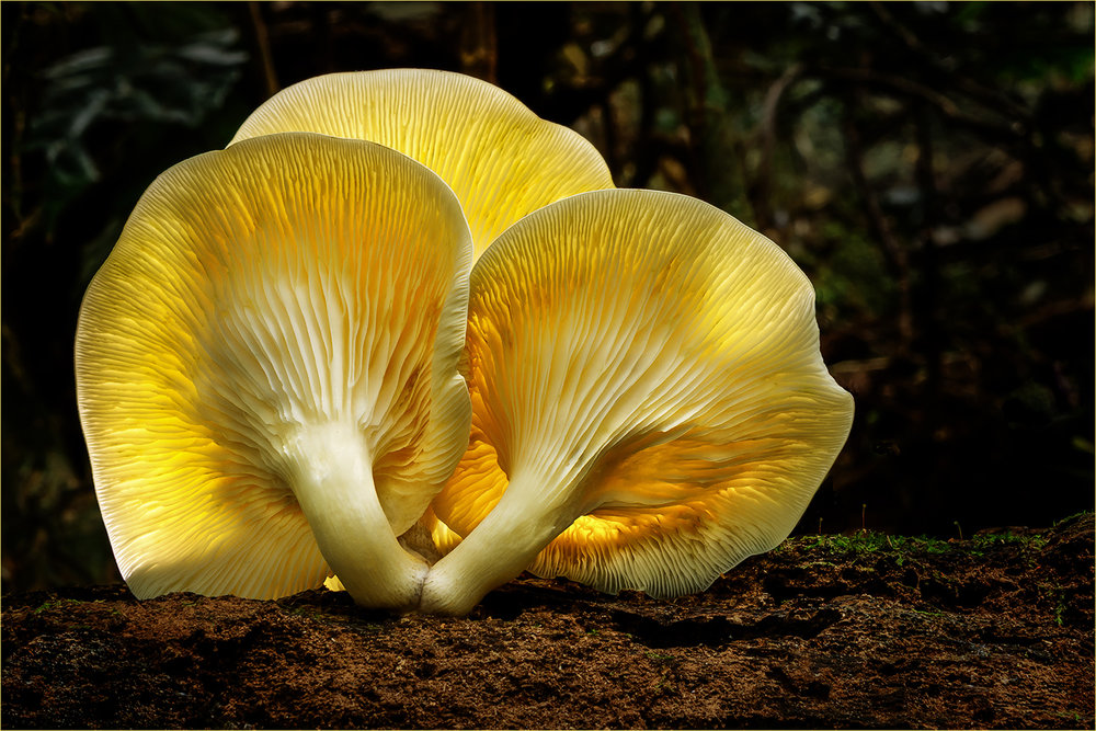 Luminous Fungi by John Stein