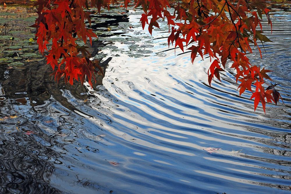 autumnal-ripples-1384452.jpg