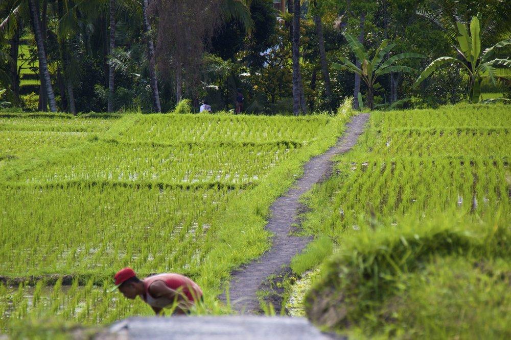 ubud bali indonesia 5.jpg