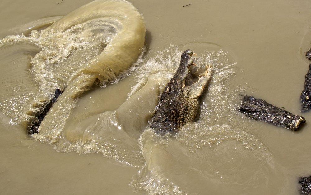 rangoon yangon crocodile farm burma myanmar 10.jpg