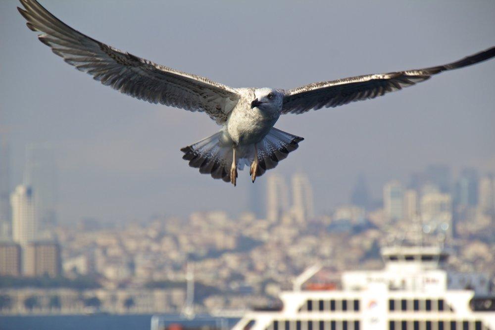 istanbul turkey public ferries 9.jpg