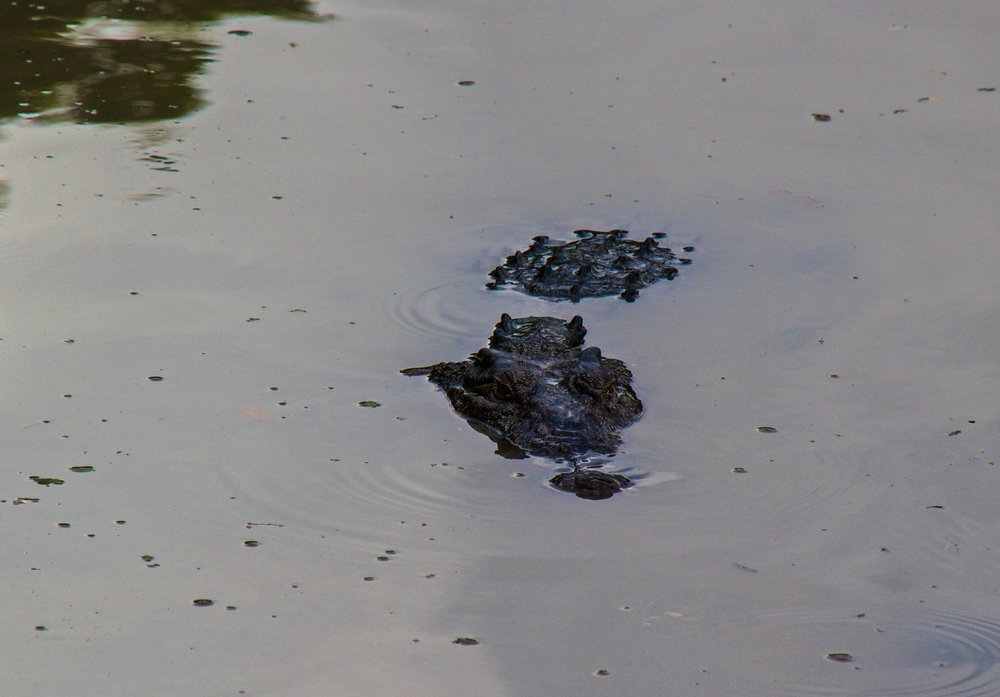 rangoon yangon crocodile farm burma myanmar 1-2.jpg