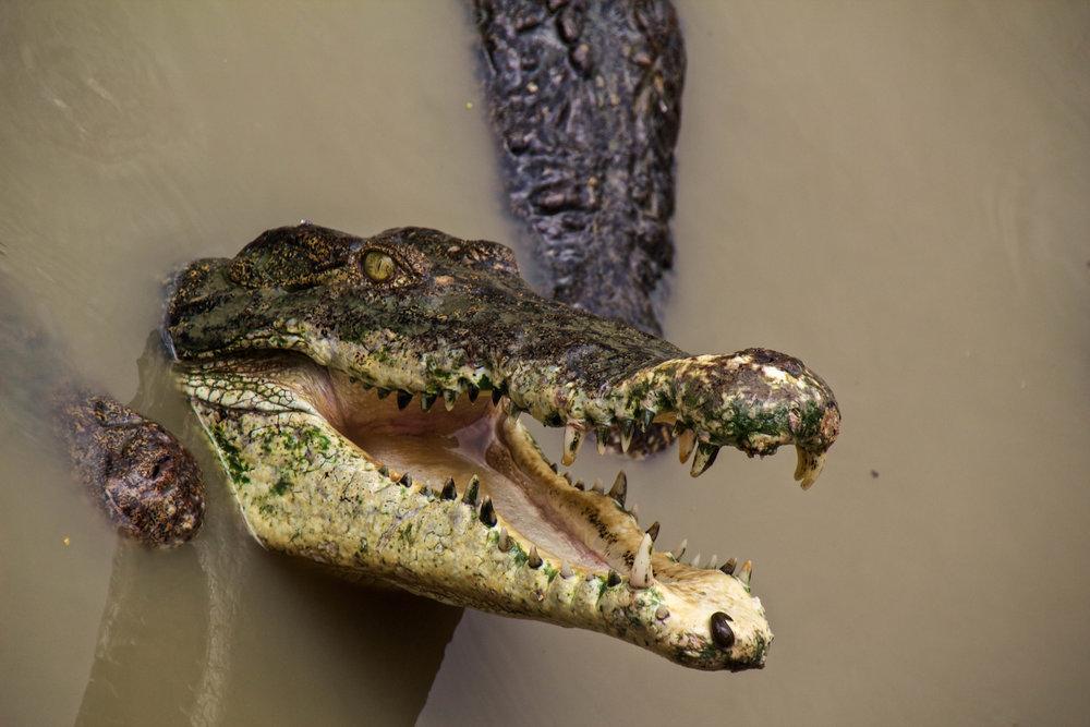 rangoon yangon crocodile farm burma myanmar 2-2.jpg