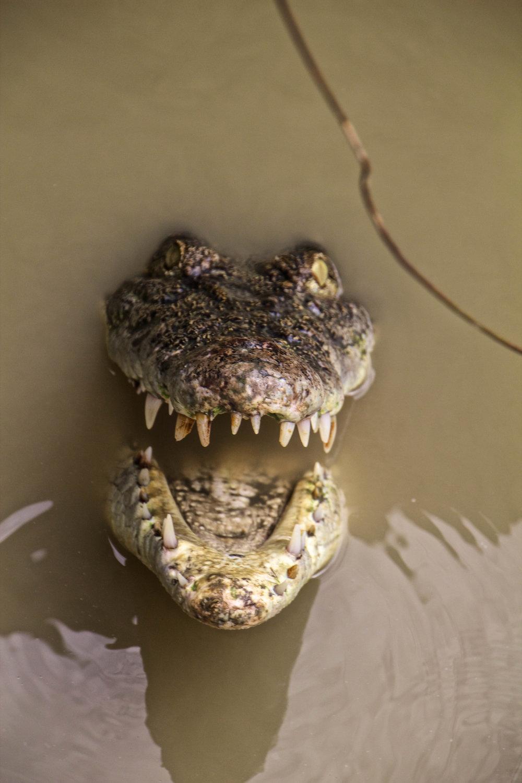rangoon yangon crocodile farm burma myanmar 5-2.jpg