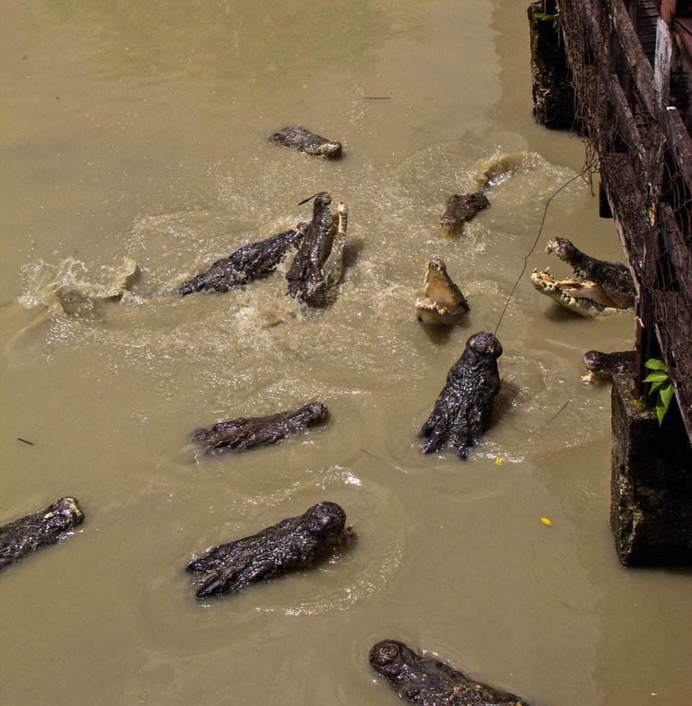 rangoon yangon crocodile farm burma myanmar 8-2.jpg