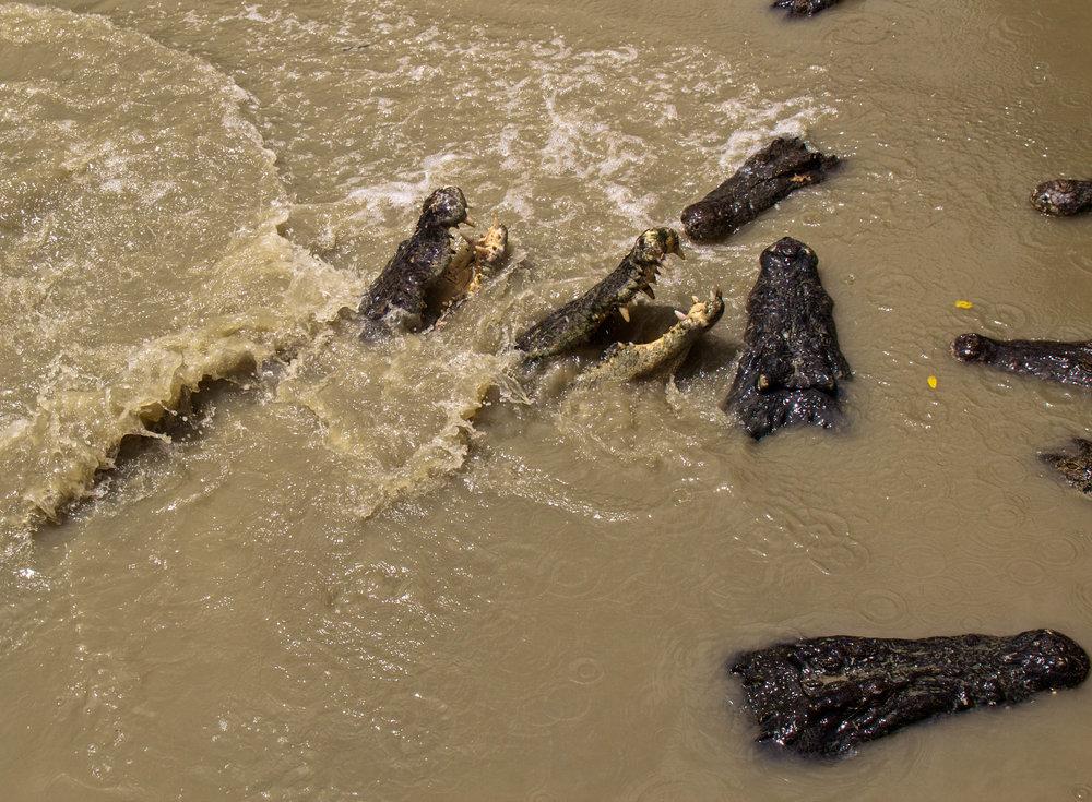 rangoon yangon crocodile farm burma myanmar 11-2.jpg