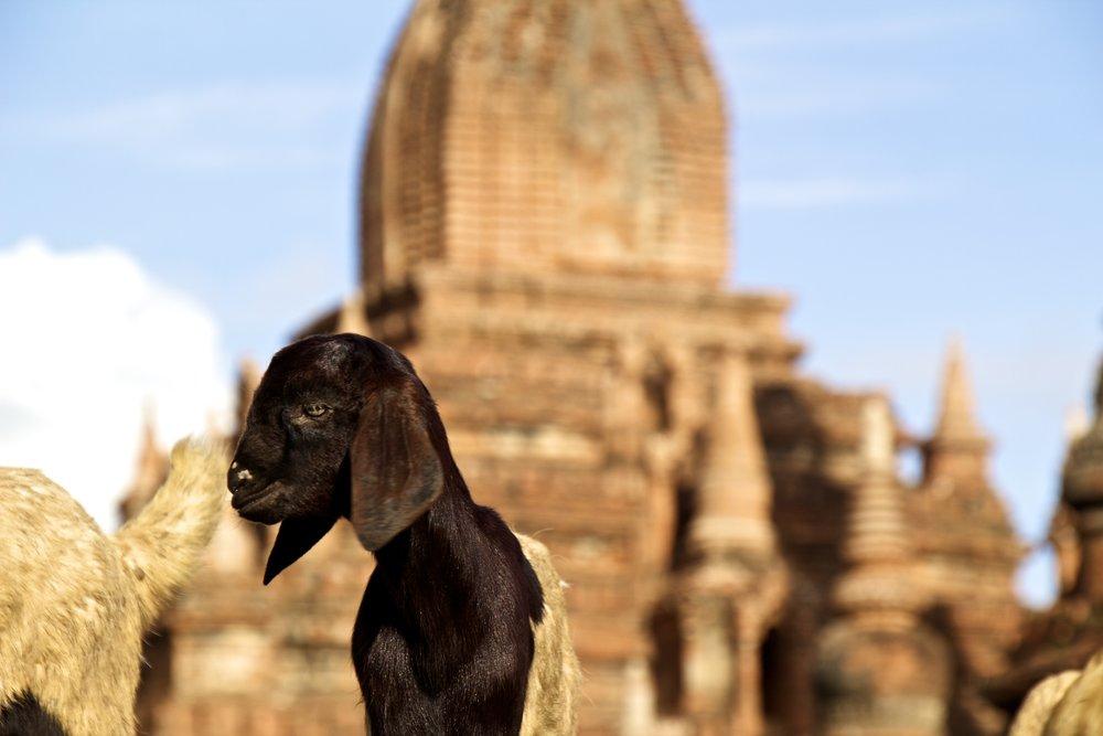 bagan burma myanmar buddhist temples 3.jpg
