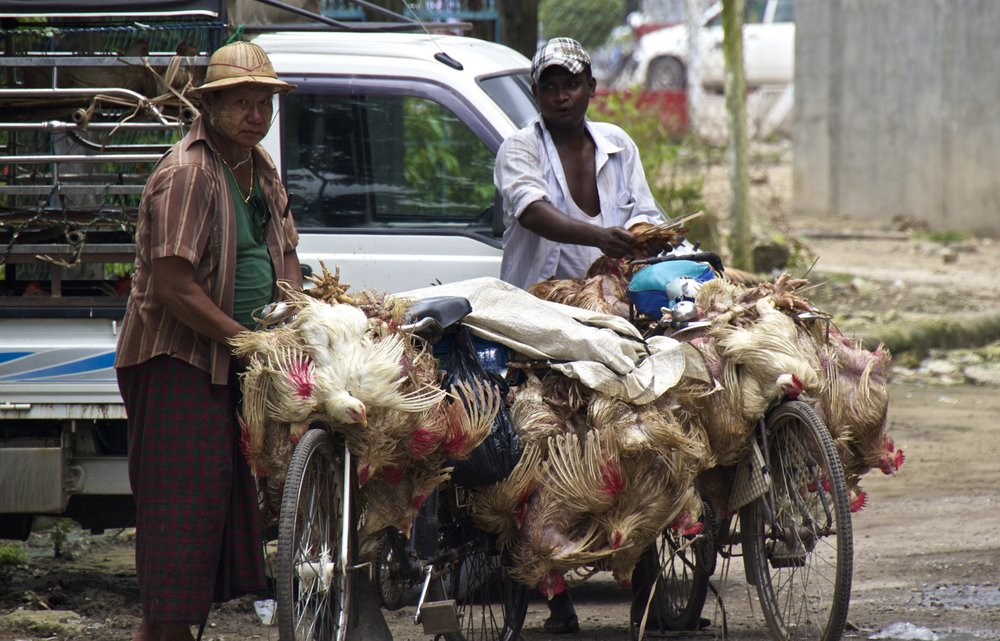 rangoon burma yangon myanmar 9.jpg