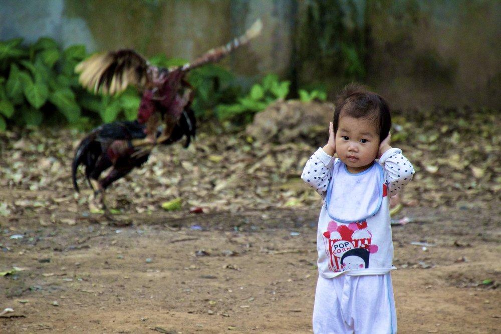 Bac Ninh Vietnam cockfight 8.jpg