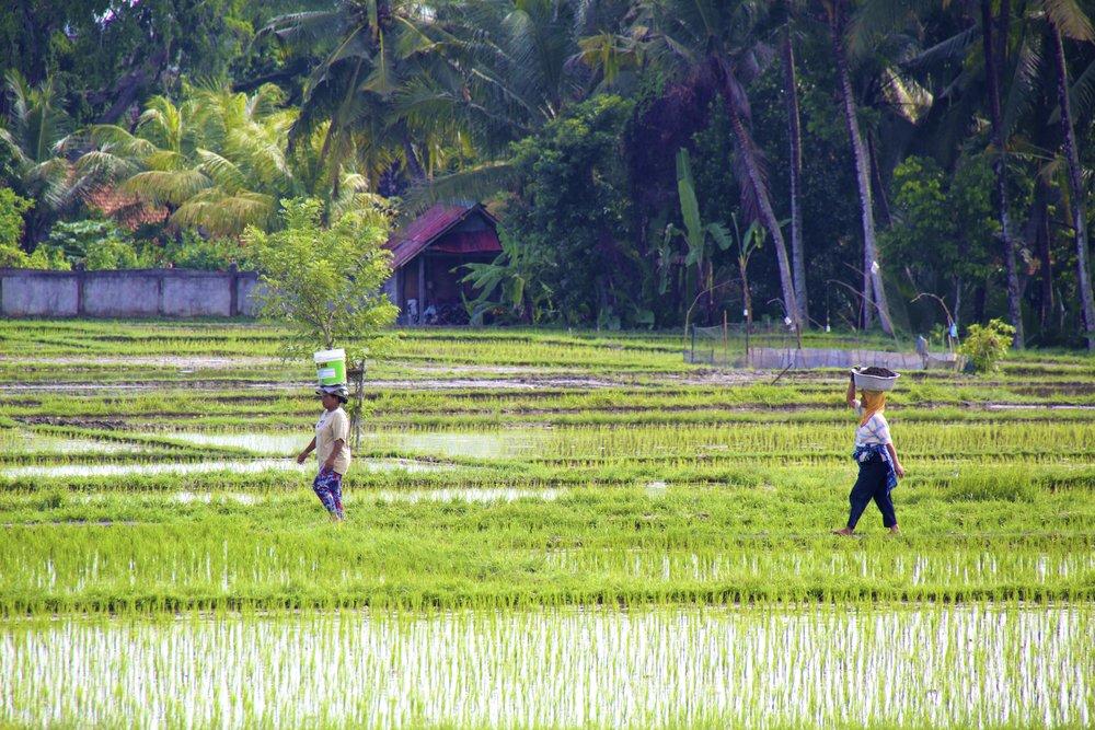 ubud bali indonesia 6.jpg
