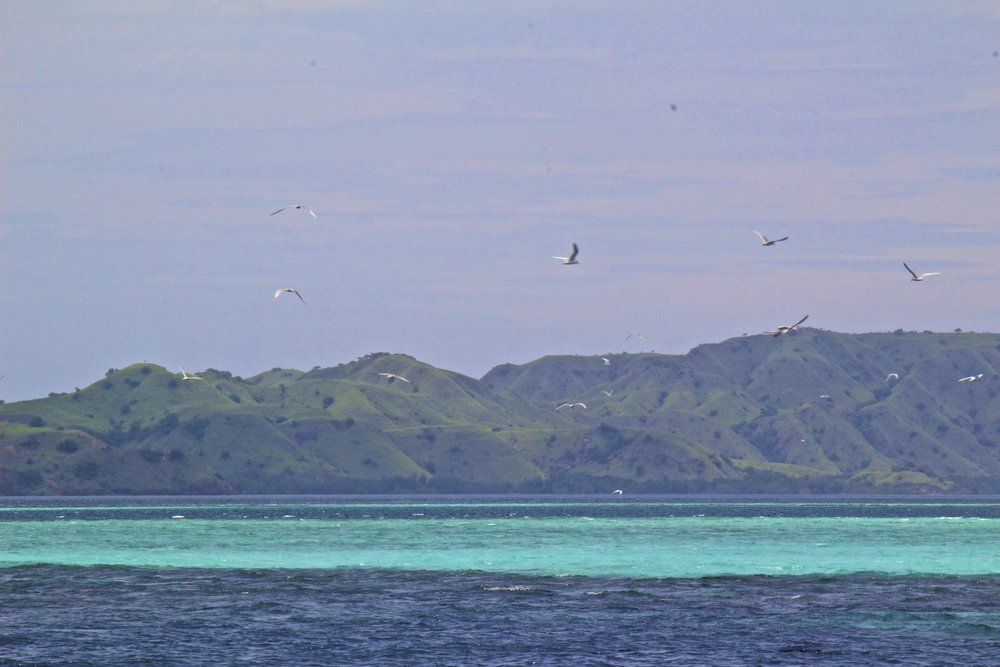 komodo islands flores indonesia 6.jpg