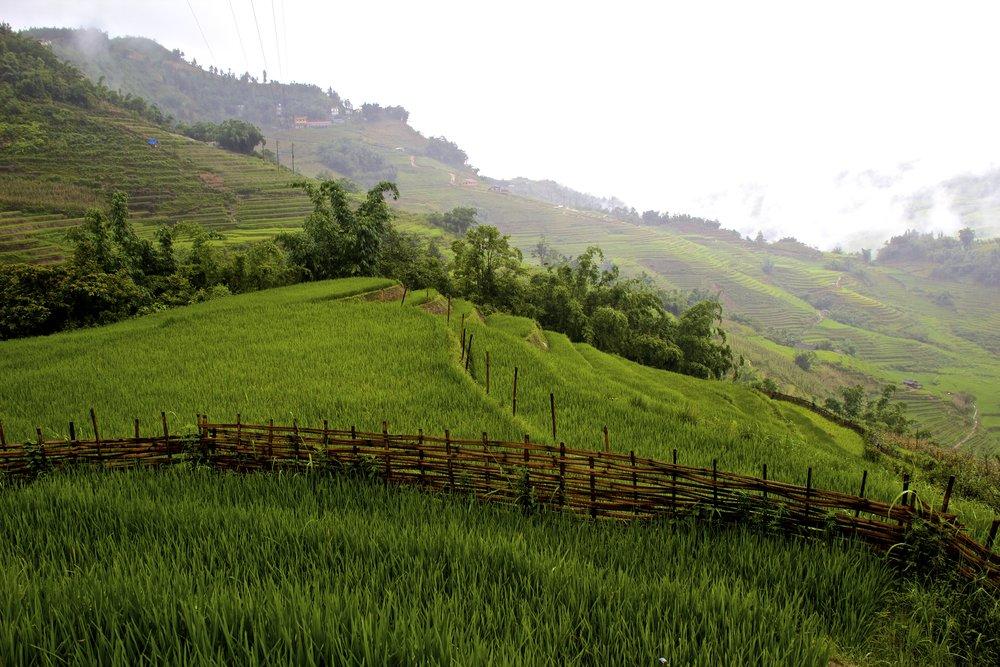 sa pa lao cai vietnam rice paddies 2.jpg