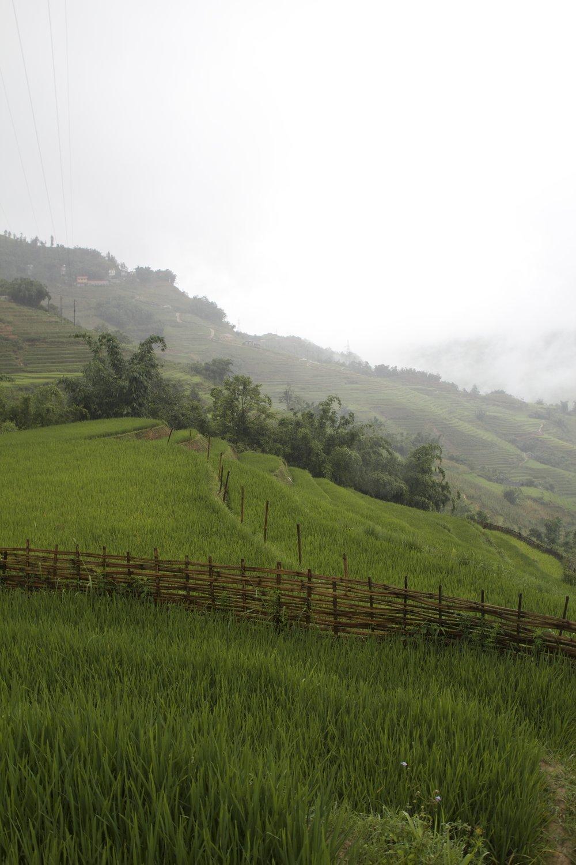 sa pa lao cai vietnam rice paddies 3.jpg