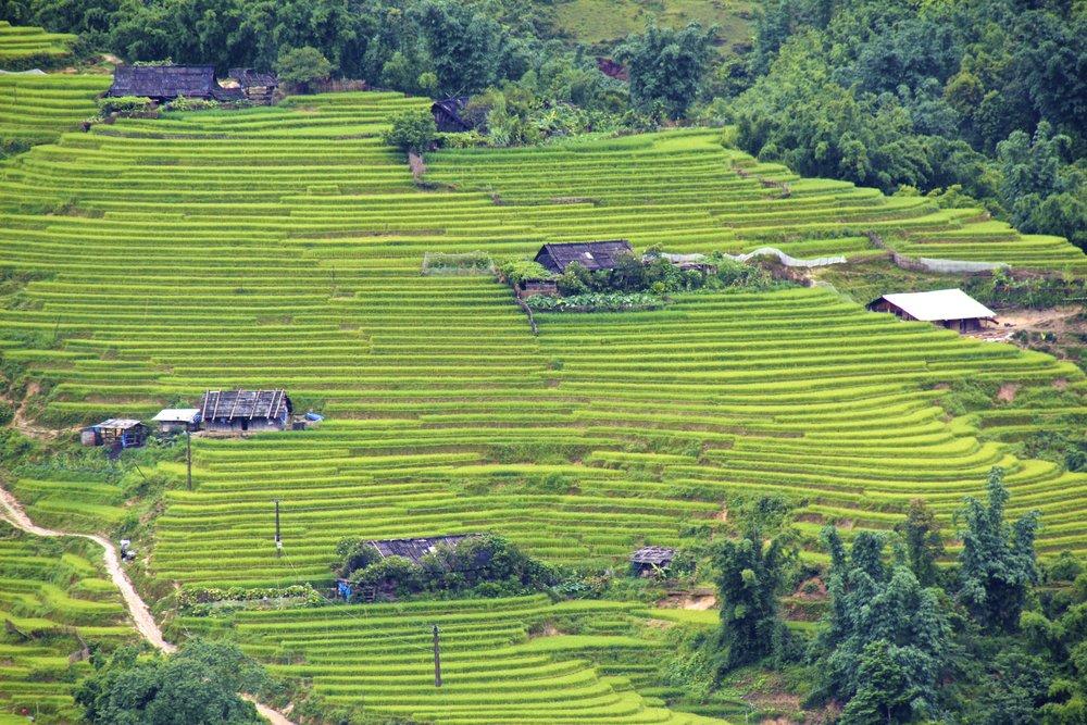sa pa lao cai vietnam rice paddies 8.jpg