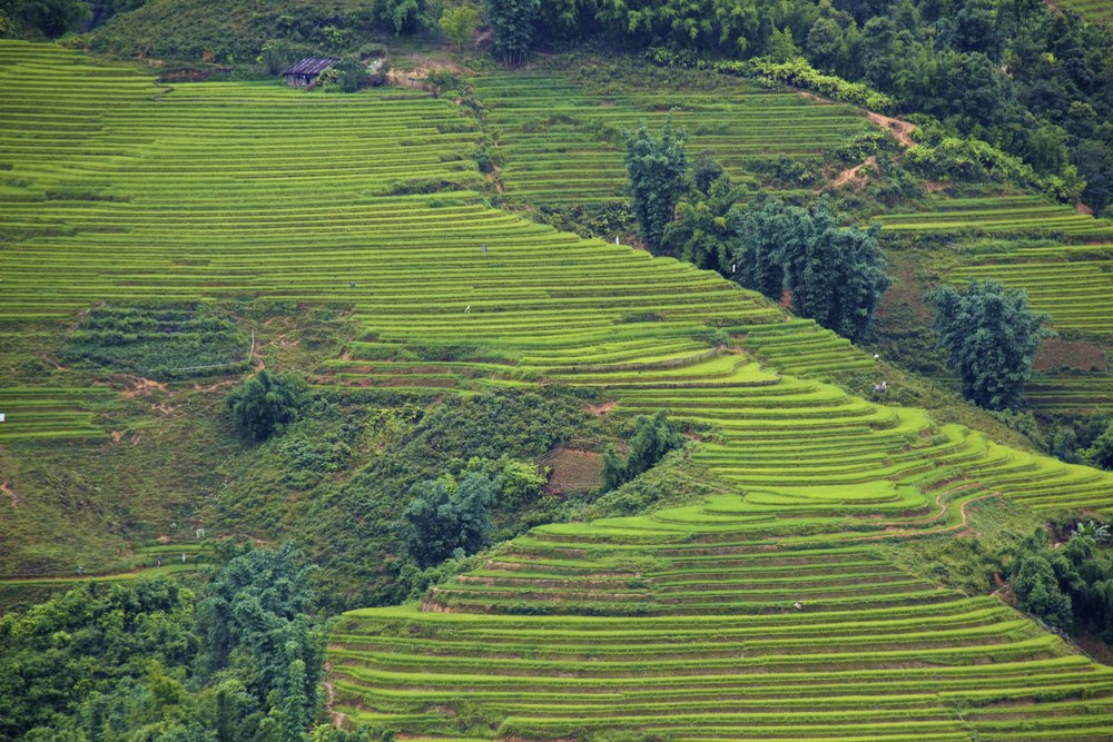 sa pa lao cai vietnam rice paddies 10.jpg