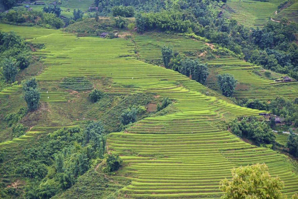 sa pa lao cai vietnam rice paddies 11.jpg