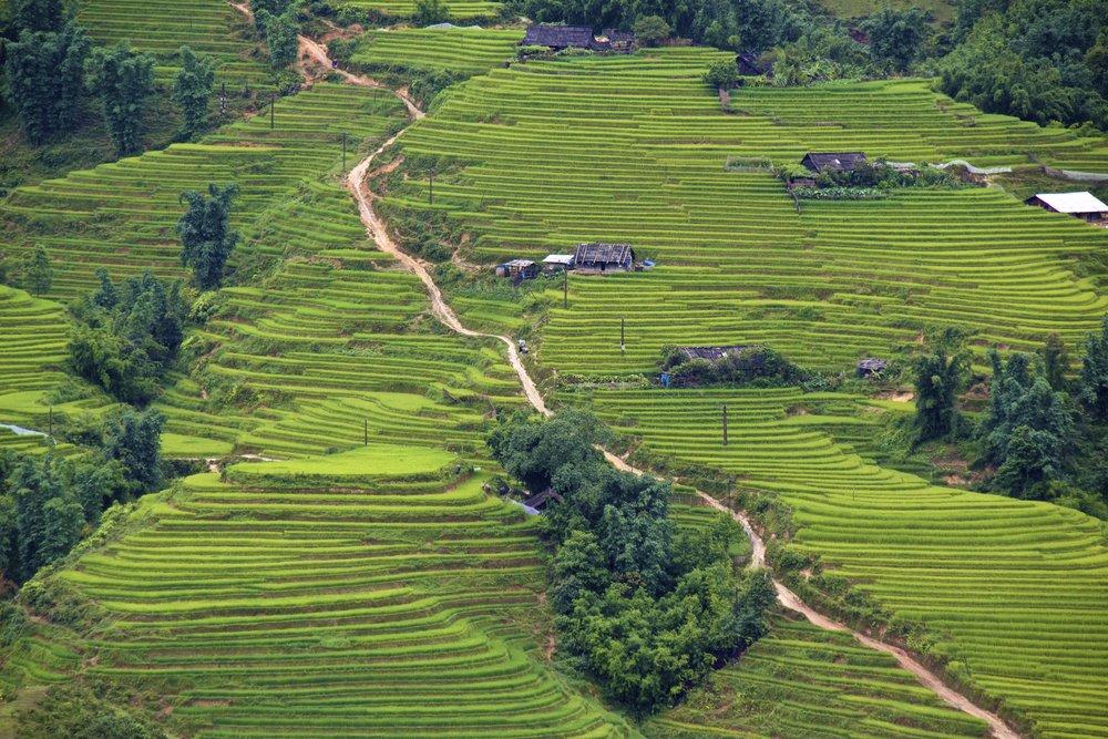 sa pa lao cai vietnam rice paddies 15.jpg