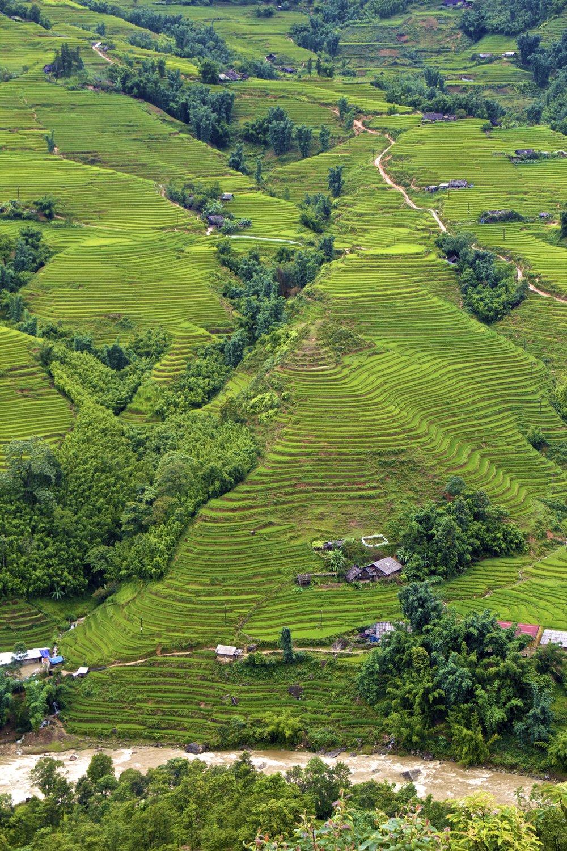 sa pa lao cai vietnam rice paddies 20.jpg