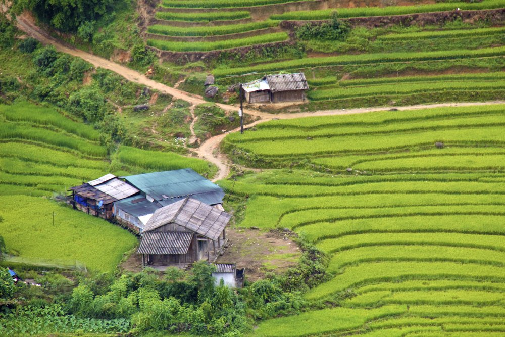 sa pa lao cai vietnam rice paddies 21.jpg