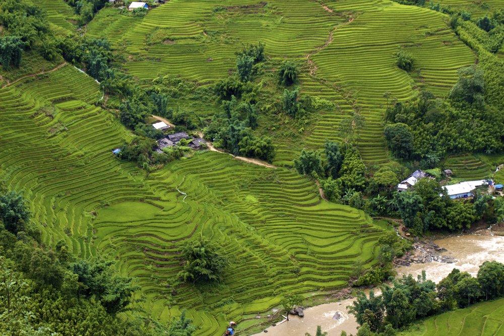 sa pa lao cai vietnam rice paddies 31.jpg