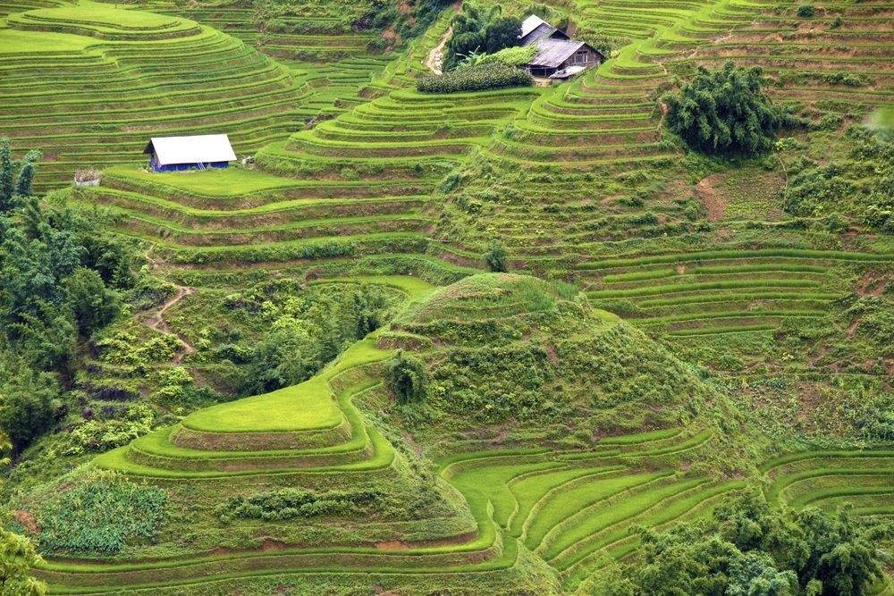 sa pa lao cai vietnam rice paddies 36.jpg