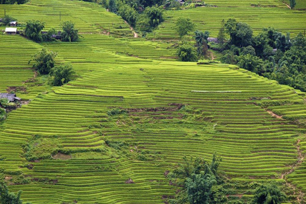 sa pa lao cai vietnam rice paddies 39.jpg