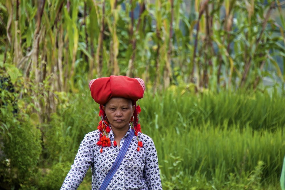 sa pa dzao people rice paddies .jpg