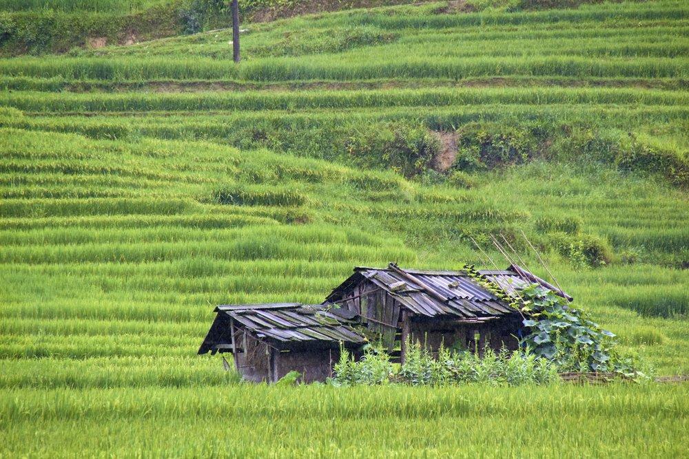 sa pa lao cai vietnam rice paddies 47.jpg