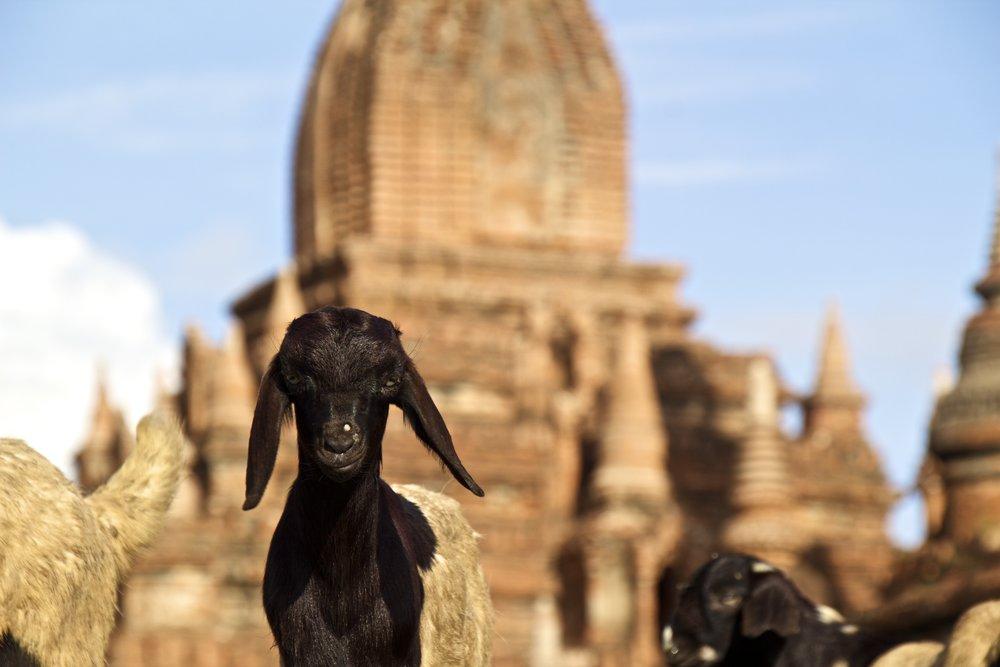 bagan burma myanmar buddhist temples 2.jpg