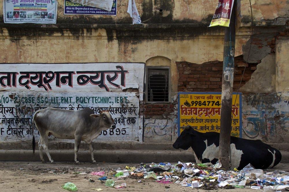 varanasi india street photography 7.jpg