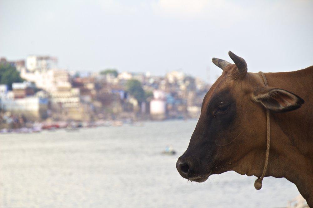 varanasi ghats 16.jpg