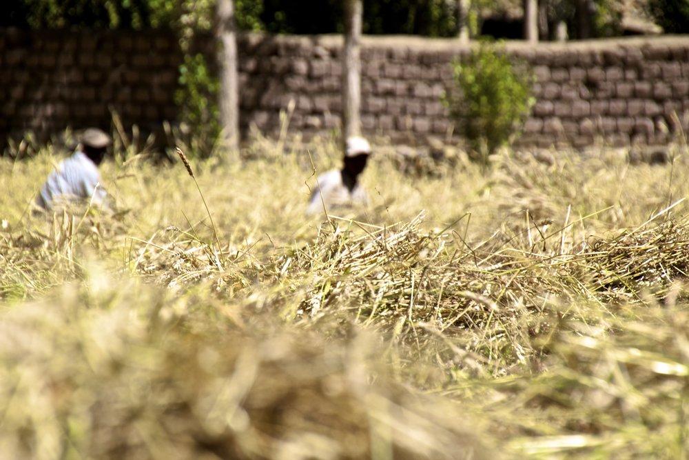 leh ladakh india 3.jpg